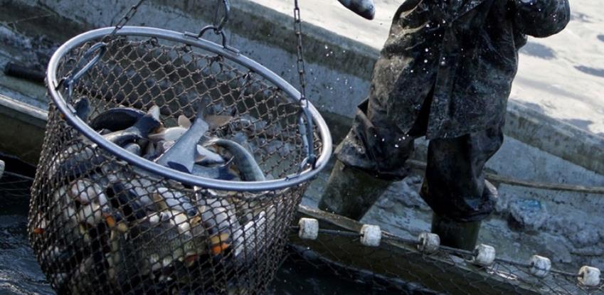Ministarstvo privrede KS objavilo javni poziv za unapređenje ribarstva