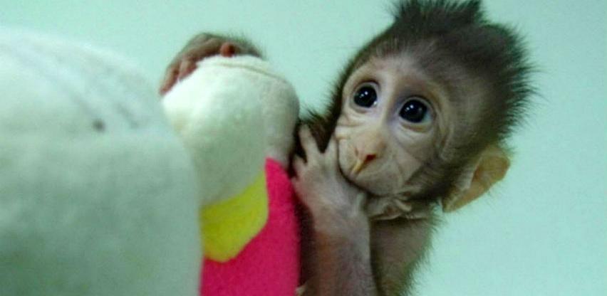 Majmun nije samo zabava, majmun je ljubav