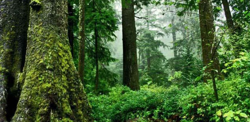 Cigelj: Obezbijediti finansijska sredstva za zaštitu i unapređenje šuma