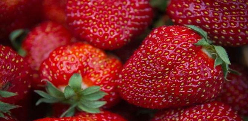 Vlada ZDK odobrila poticaje uzgajivačima jagodičastog voća