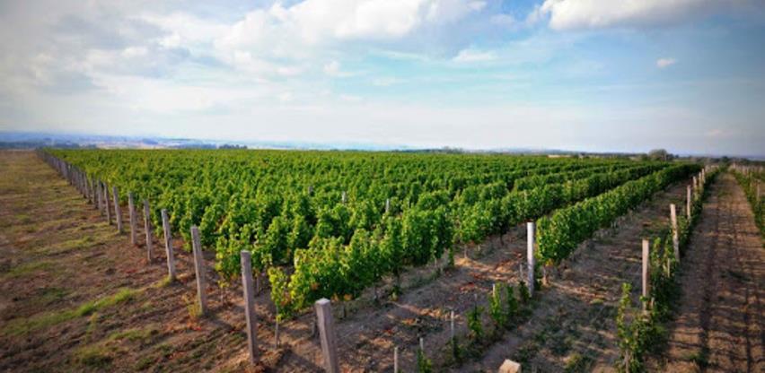Kako preživjeti krizu: Trebinjski vinari bore se za opstanak