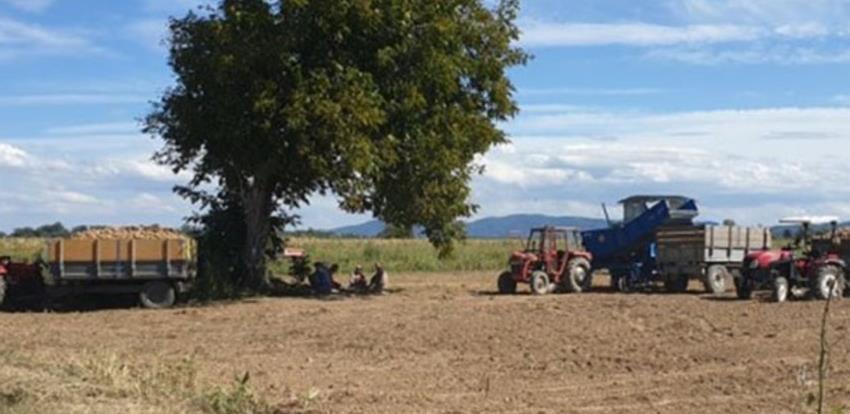 Izuzetni prinosi krompira sa vakufskih parcela u Janji