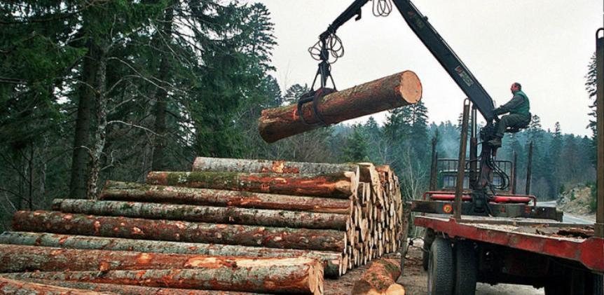 FBiH: Smanjena prodaja šumskih sortimenata za 11 posto