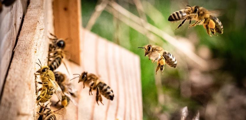 Danas je Svjetski dan pčela - UN pozivaju: Izgradite bolje za pčele