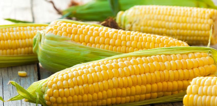 U Srbiji kukuruz najtraženija roba