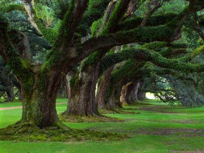 Znanstvenici izračunali koliko stabala raste na zemlji