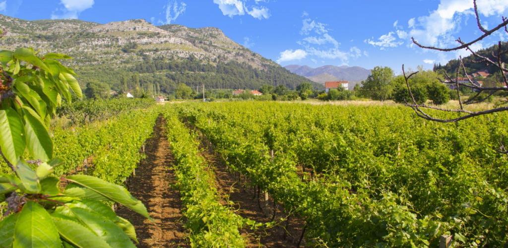 Poljoprivreda budućnost Hercegovine i regiona