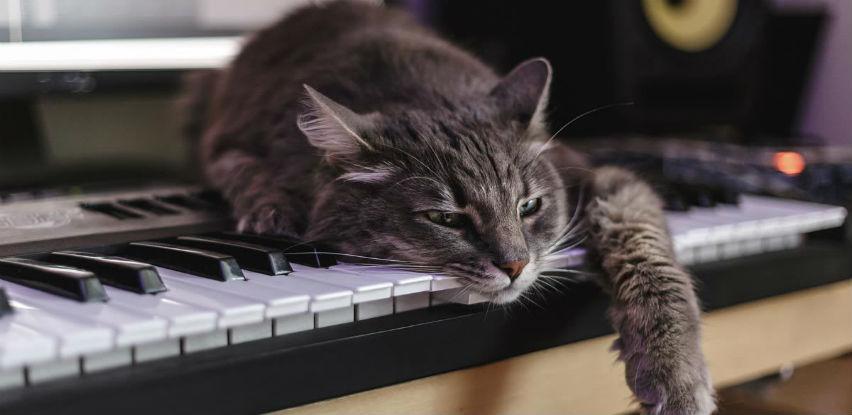 Mačkoljupci će razumjeti: Maca koja voli klavir