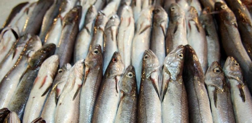 Izvozom žive ribe na tržište EU dodatno bi se unaprijedio sektor ribarstva