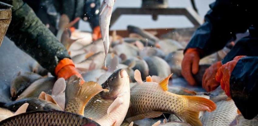 Pomoć za sektor ribarstva