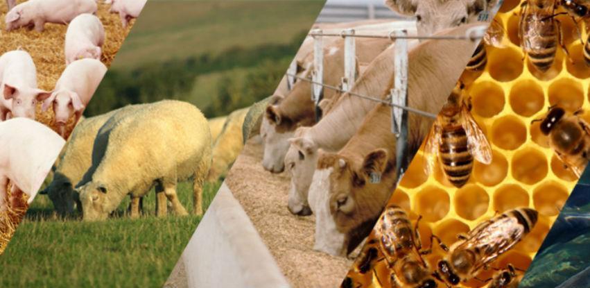 Poticaji animalnoj proizvodnji veći od 3,2 miliona KM