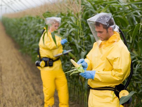 Monsanto dolazi u Hrvatsku
