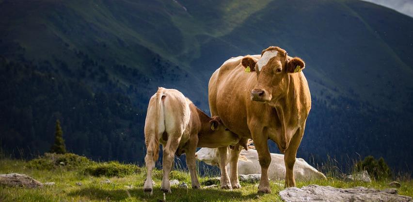 Hitnim mjerama Vlada RS-a pokušava pomoći poljoprivredi