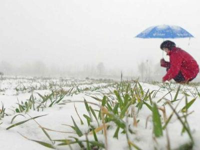 Poljoprivrednici odahnuli: Bijeli pokrivač spas za usjeve i voćnjake
