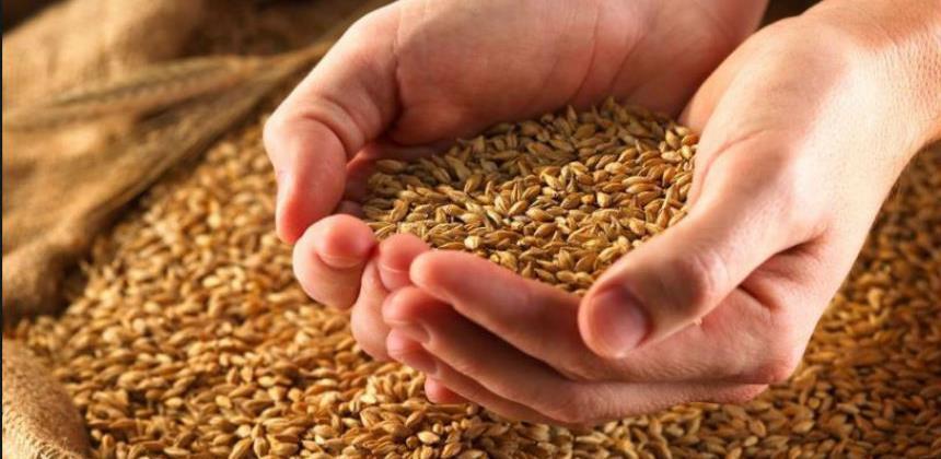 RS kupuje pšenicu, kukuruz i soju