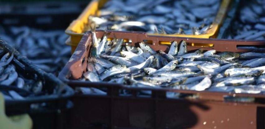 Pad prodaje u poljoprivredi, šumarstvu i ribarstvu RS