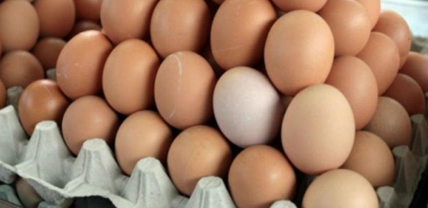 Izvezene prve količine jaja na evropsko tržište
