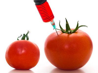 Države mogu da zabrane genetski modifikovane usjeve