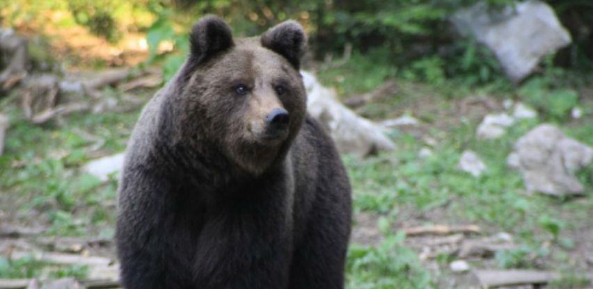 Francuski predsjednik Macron zabranio uvoz medvjeda iz Slovenije