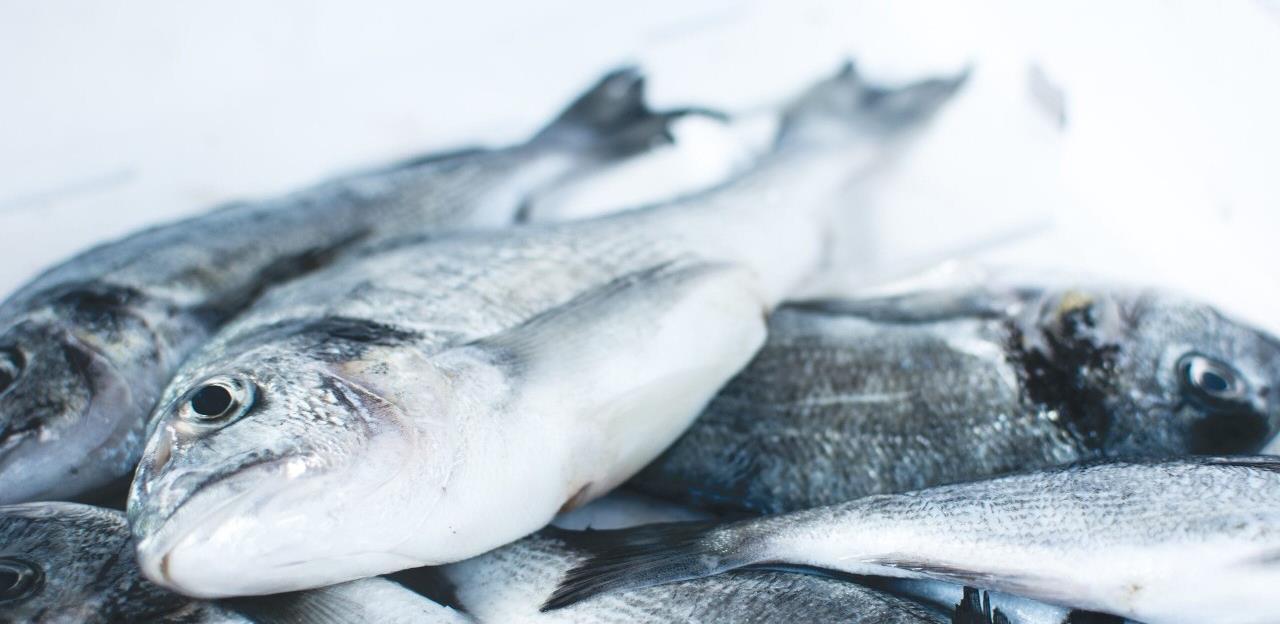 """Bh. riba početkom godine """"pliva"""" u Rusiju"""