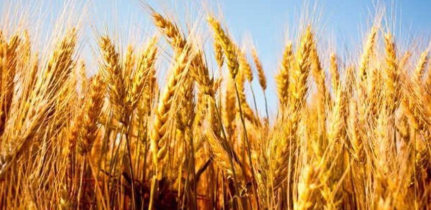 Svjetske cijene hrane za trećinu više nego lani