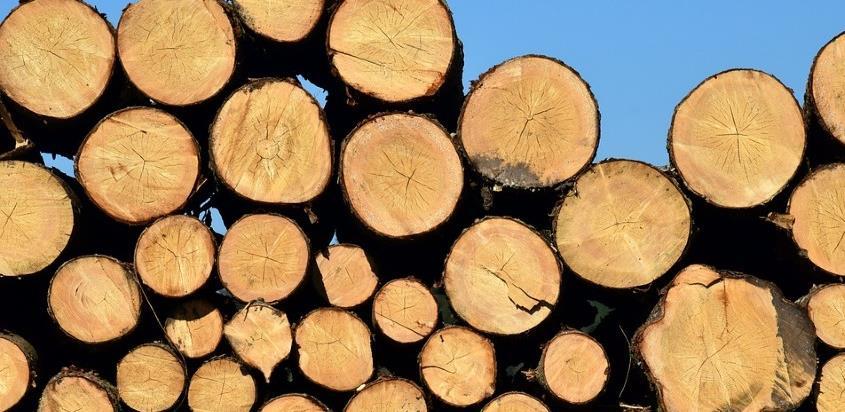 Drvar: Stroj za drvo koji mijenja nekoliko radnika