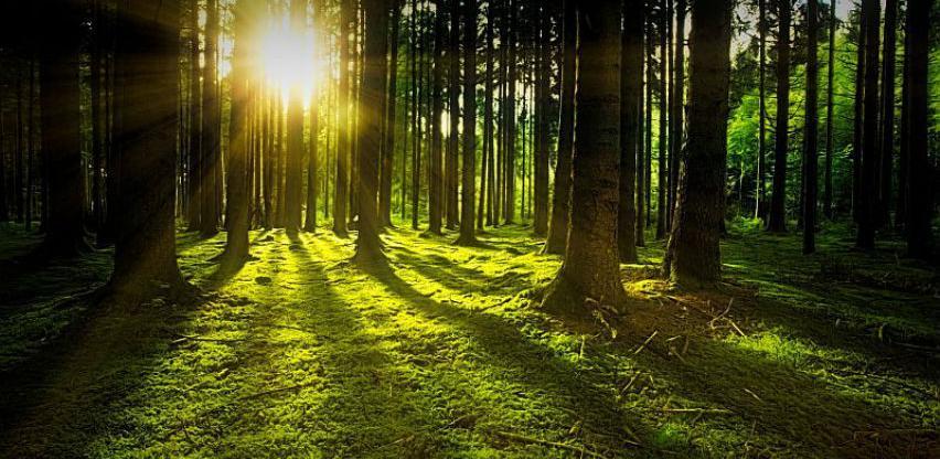 Izrada novog informacionog sistema u šumarstvu