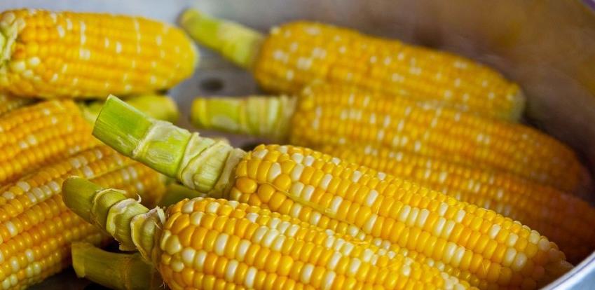 Cijene žitarica, naročito kukuruza, rastu iz dana u dan