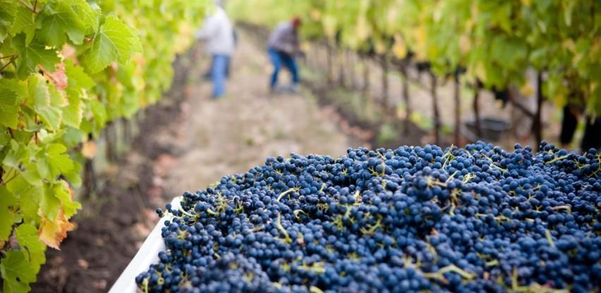 Zaštititi domaću proizvodnju i vinarima omogućiti izlazak na nova tržišta