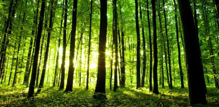 Omogućiti opštinama nesmetano korištenje sredstava od šumskih bogatstava