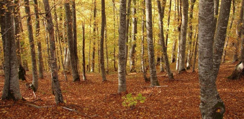 Pravilnik o uvjetima za sticanje licence za izvođenje radova u šumarstvu