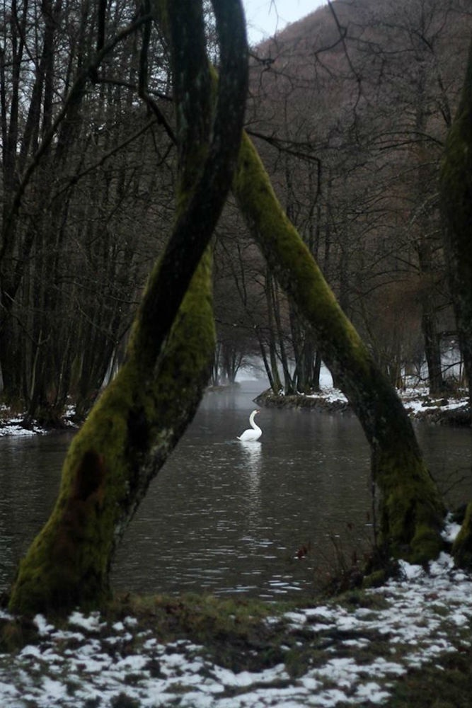 Tesnim Karišik - Labuđe jezero