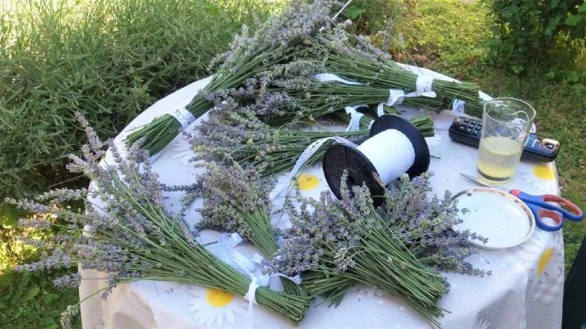 Obrada ljekovitog i aromatičnog ulja, spoj ugodnog s korisnim