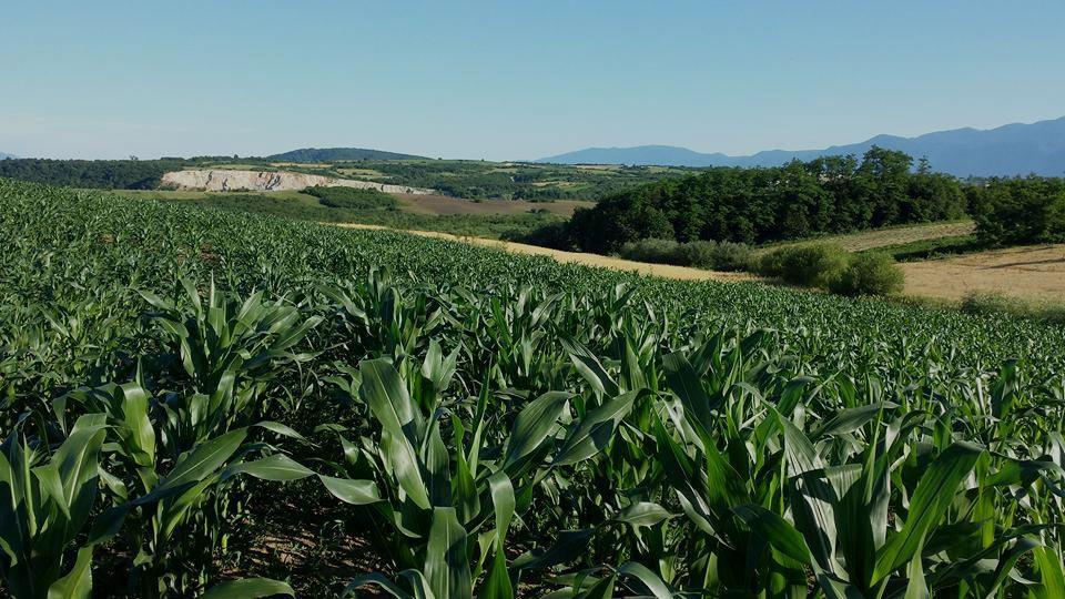 Kroz Agrorevoluciju proizvodnja i plasman mesa po najvišim standardima