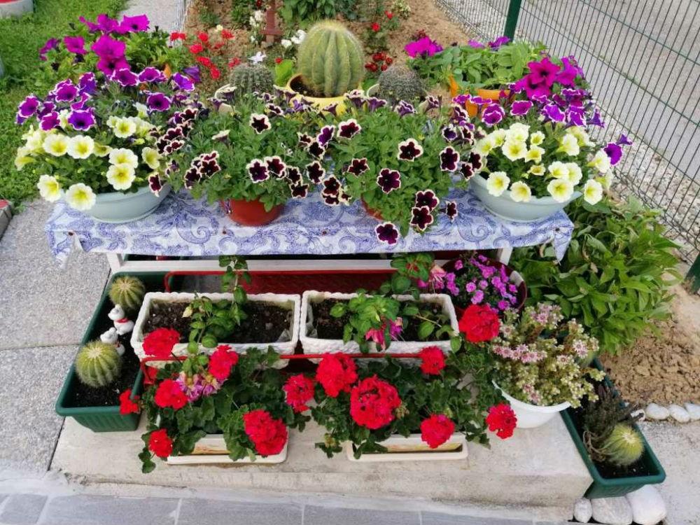 Održane prve praktične radionice iz oblasti hortikulturnog uređenja
