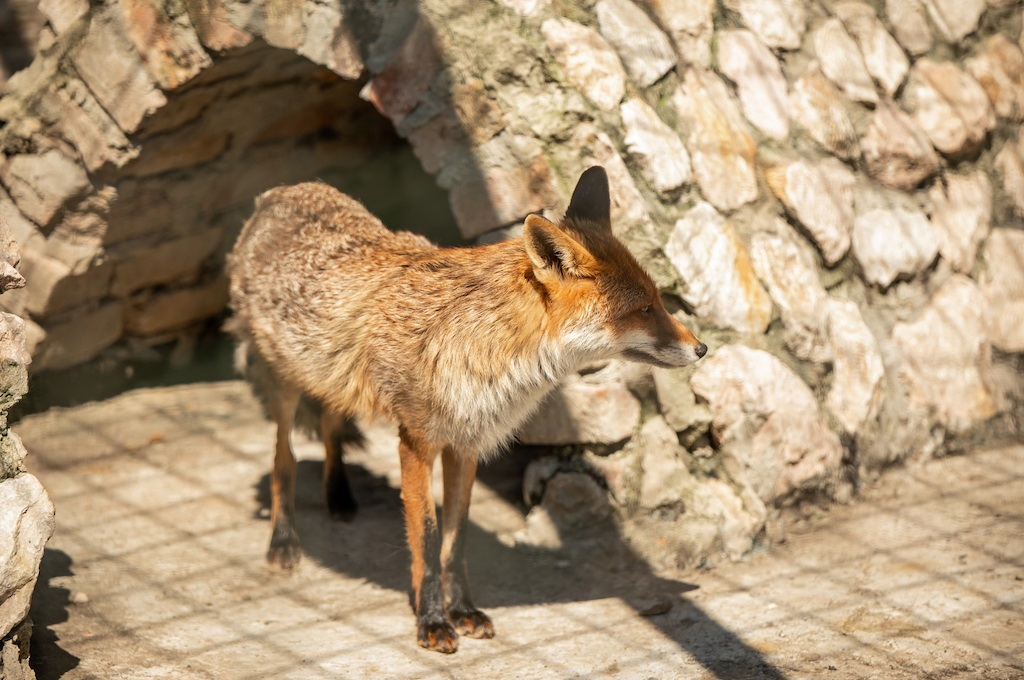 Zoo vrt Bingo, oaza mira i sadržaji za cijelu porodicu