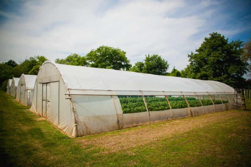 Centar Fenix: Bio proizvodi iz vlastitog uzgoja