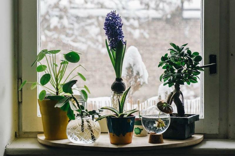 Mehmed Mešanović: Plantismus zelena groznica se sve više širi i donosi ljubav