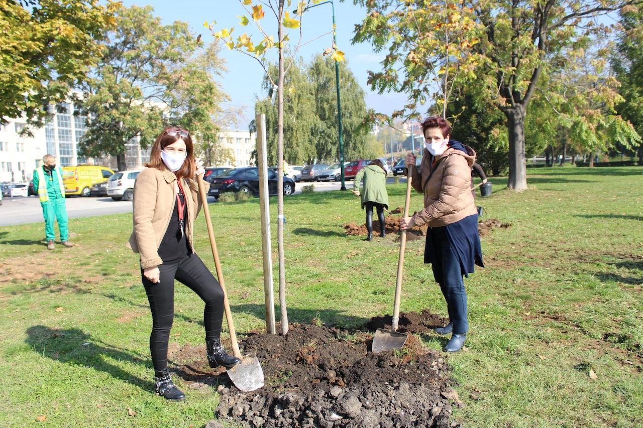 ProCredit Bank jača pluća grada: U centru Sarajeva zasadili stabla