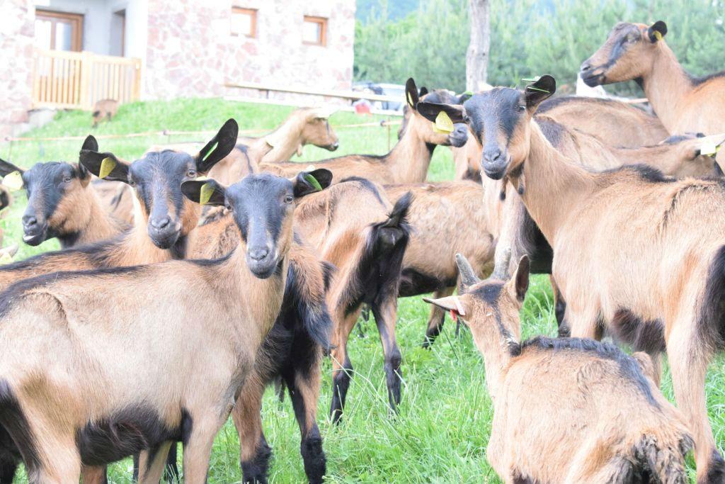 Miroslav Klječanin širi proizvodnju kozjeg sira na Očaušu