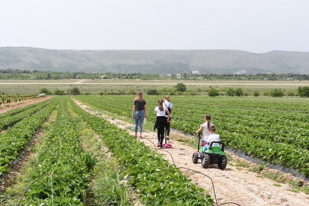 Užitak za cijelu porodicu: Jaffa plantaže postaju turistički brend Hercegovine