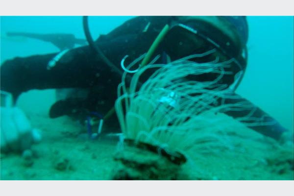 U Neumskom zalivu sedam vrsta bezopasnih ajkula