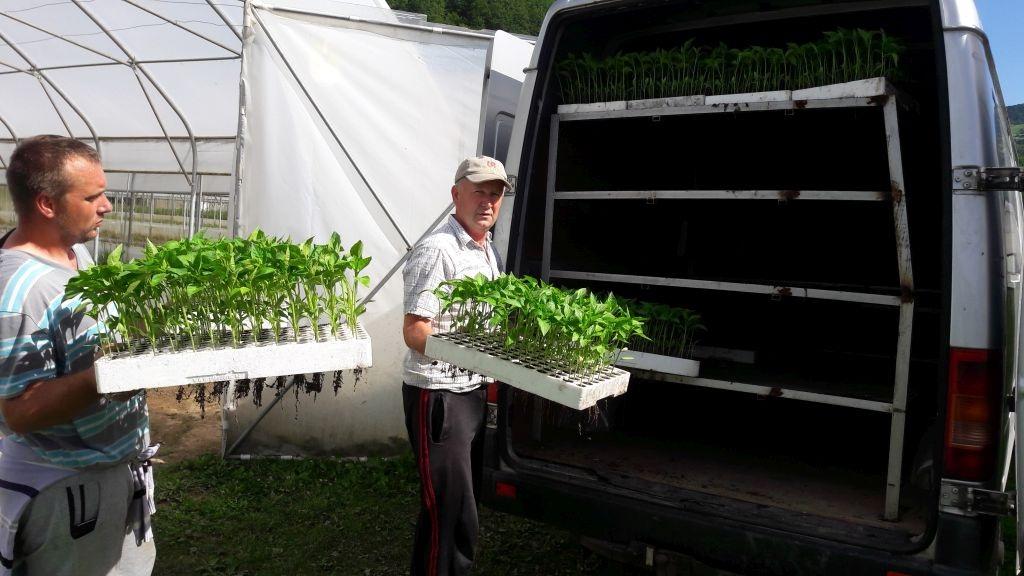 Senad Omerović u Konjević Polju širi posao s paprikom