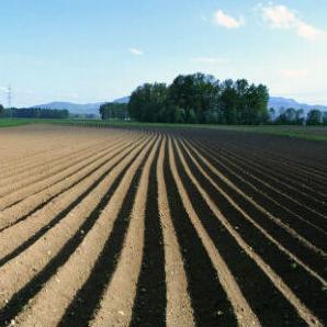 Općina Sanski Most raspisala je javni poziv za zakup poljoprivrednog zemljišta ukupne površine 4.431,57 hektara, a koje se na osnovu programa o gospodarenju poljoprivrednim zemljištem nalazi u vlasništvu države.