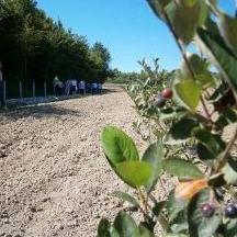 """Iz organizacije """"Tera Sana"""" pozvali su poljoprivredne proizvođače, koji su zainteresovani za sadnju aronije, da se prijave u ovu organizaciju koja se bavi provedbom projekata iz oblasti poljoprivredne proizvodnje."""