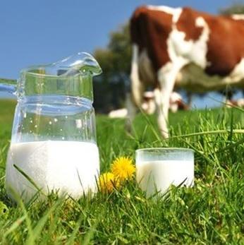 Transport sirovog mlijeka od proizvođača do mljekare u Federaciji BiH mora pratiti i obrazac 2B.