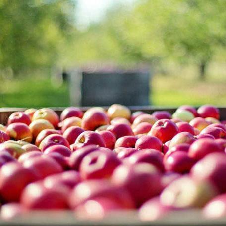 Da bi jedan proizvođač mogao da izvozi voće i povrće u zemlje EU potrebno je da budu ispoštovani mnogi uslovi i izvozna pravila.
