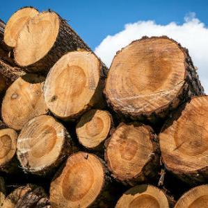 """Drvna industrija """"Sanica"""" spremna za pokretanje proizvodnje"""