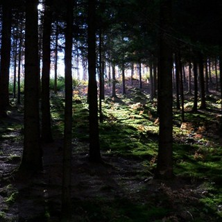 Fotografija sedmice: Duboko u šumi - autor Vedrana Maksić