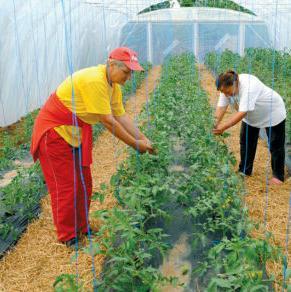 Organska proizvodnja povrća, koja je sve popularnija u svijetu, pruža višestruke mogućnosti.
